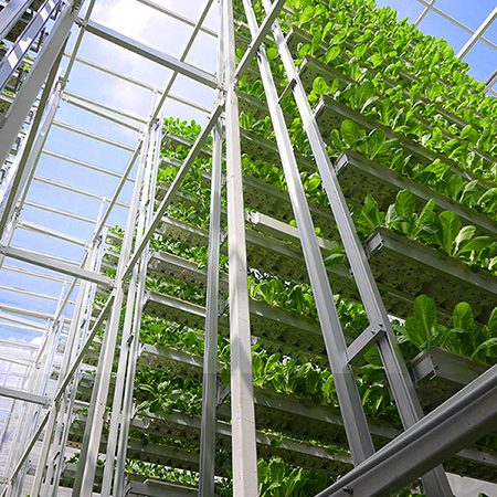 Vertical farming plants under cultivation at Sygreens