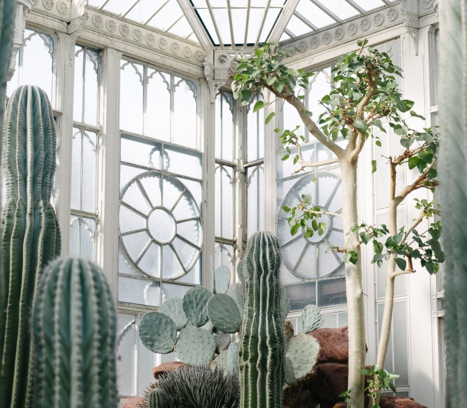Plants for a good indoor climate