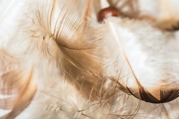 Daunen sowie Federn als nachhaltige materialien