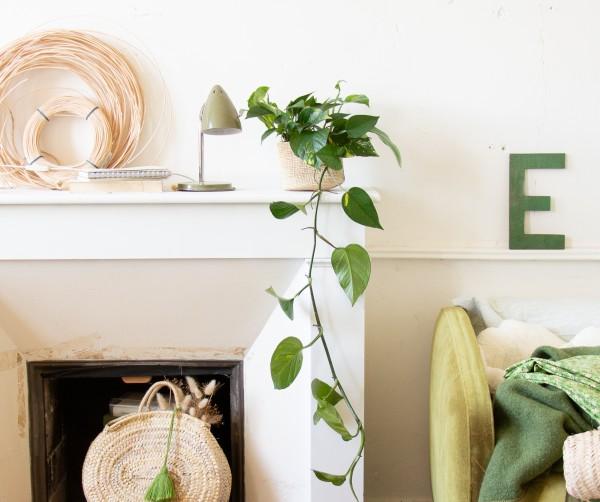 Order ivy houseplants online